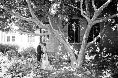 mauldin tree